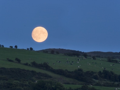 A Summer Harvest Moon? featured image