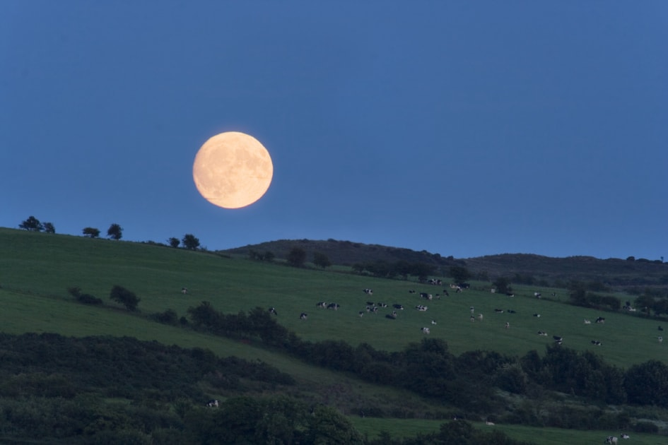 A summer Moon rising over the fields of Bute, Scotland
