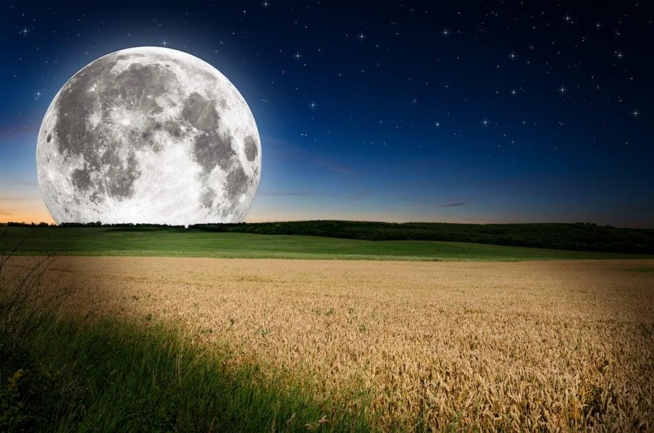 full Harvest Moon field of wheat.