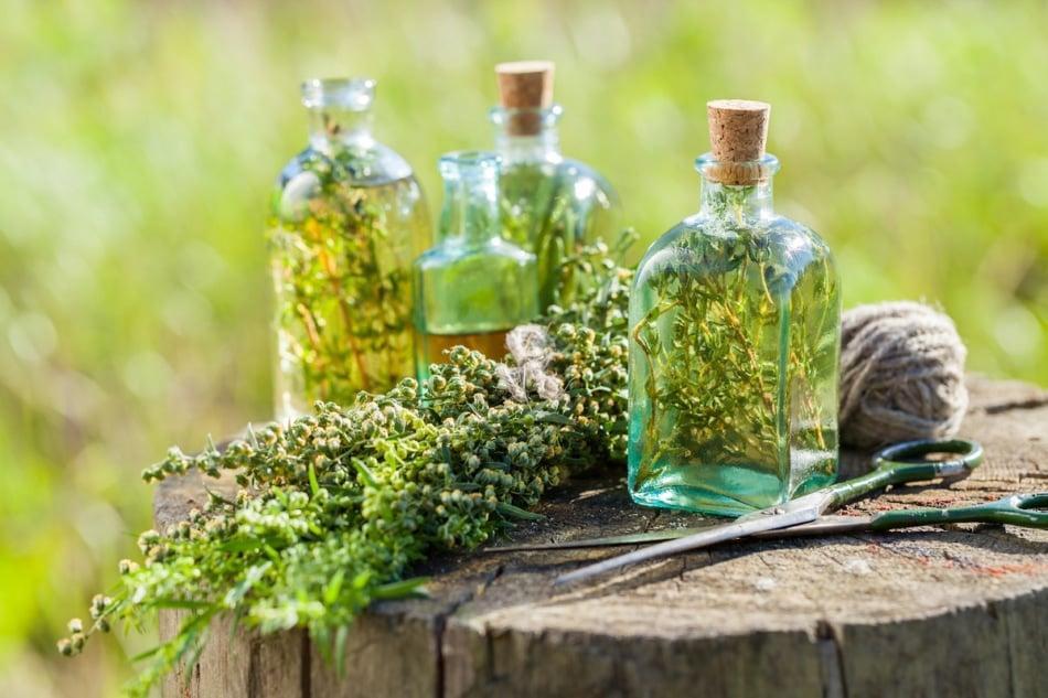 Infused herbal vinegars in glass jars.